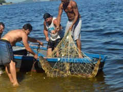 Jacare e capturado na Praia da Guanabara na Freguesia